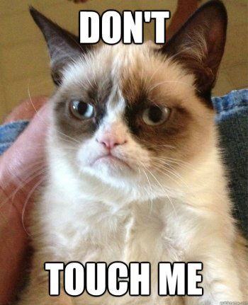 grumpy cat don't touch me