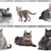 50 Shades of Grey Cats