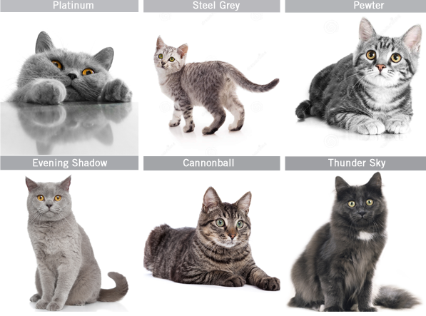 50 Shades Of Grey Cats Autostraddle