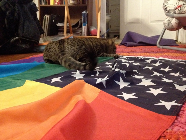 This is a cat on a homonationalist flag. Very scenic.