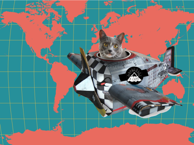 cat-plane-world-map