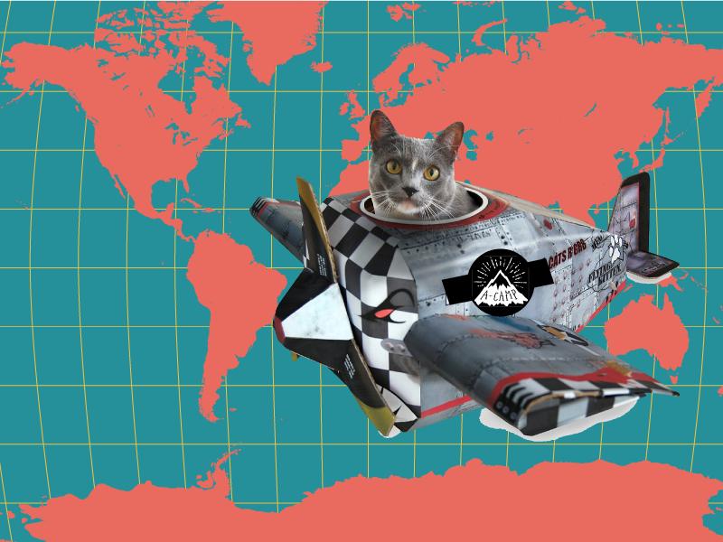 cat-plane-world-map