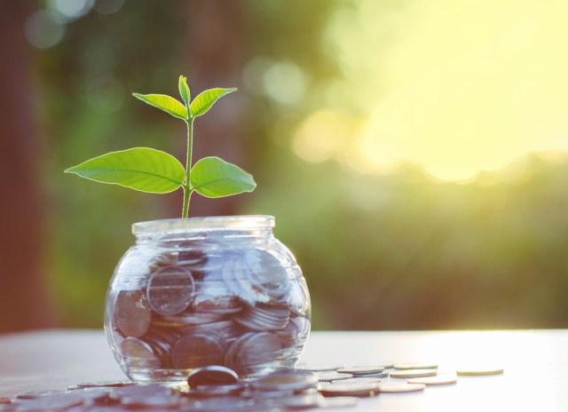 money-grows