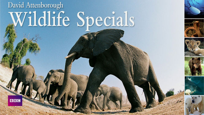 wildlife-specials