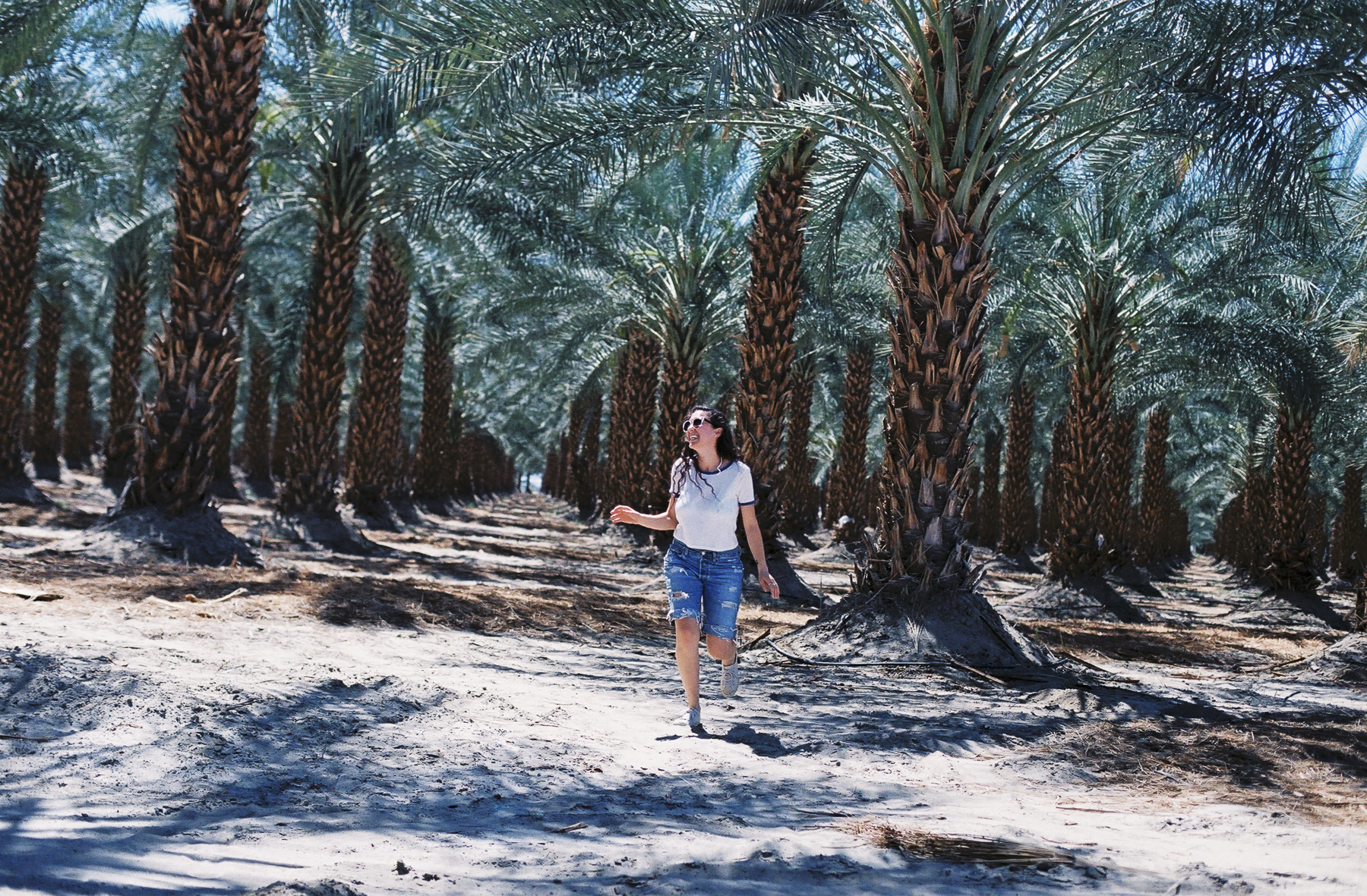 A weird palm tree farm we passed.