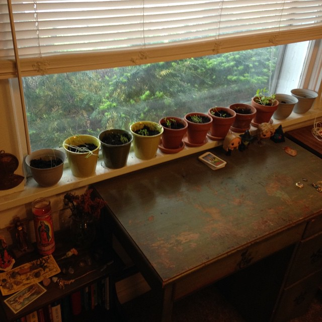 My recently planted Witch Garden. You can also see a smaller shrine to La Virgen (I have a much bigger shrine in another room).