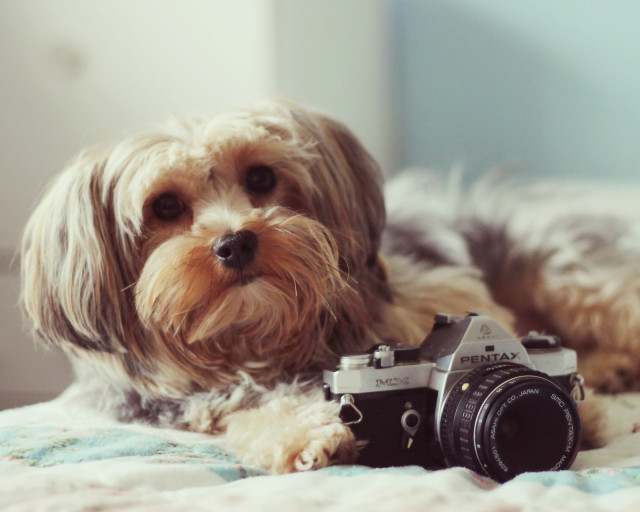 dog-with-camera-