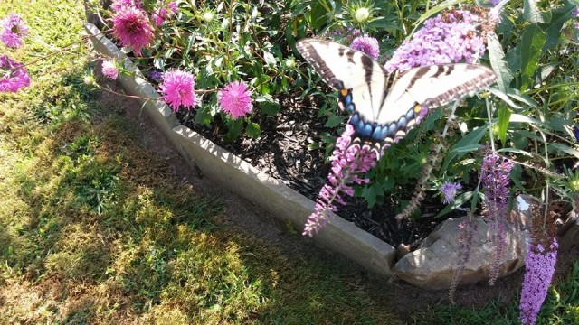 Ander's butterfly garden.  Photo Copyright: Jane MacAlpine