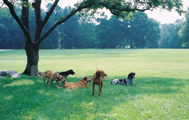 dog-park-hang-out