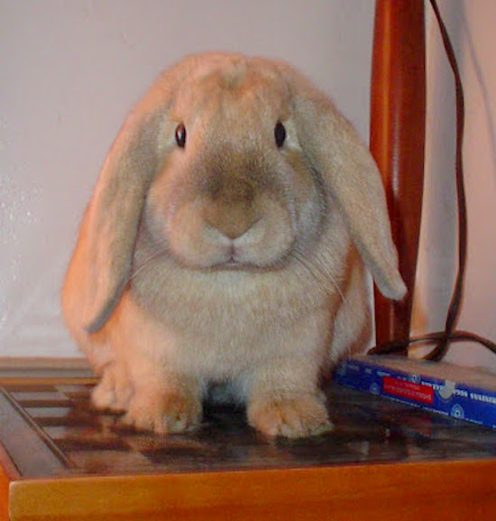 Our little baby bunny at six months old.