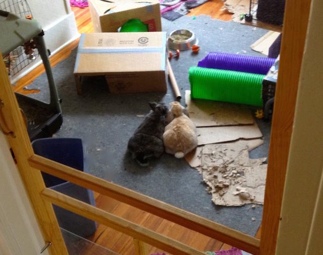 Bunny home improvements