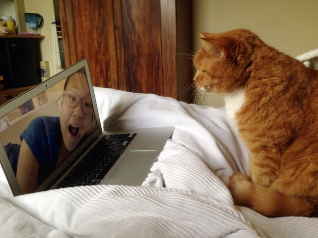 Sometimes it is acceptable to have your cat skype your partner.