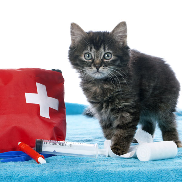 first-aid-kit-cats-05