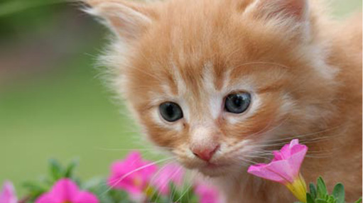 kitten and flowers aw