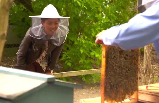 Kristen meets some bees at the hip urban farm, Princess Garden