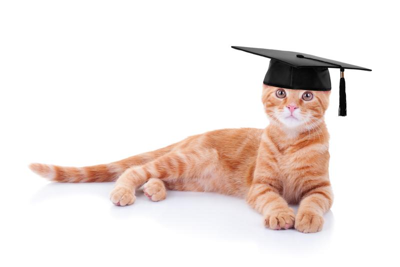 academic kitty