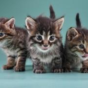 three-cats-shutterstock