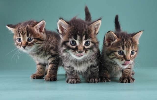 three-cats-shutterstock