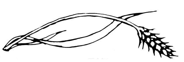 06 virgo header autostraddle