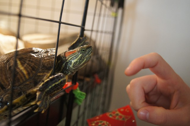 Is this turtle love or does she just want to eat my finger?