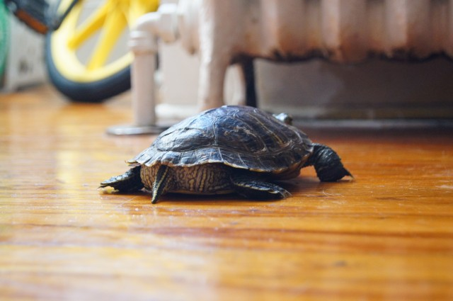 uninterested turtle is uninterested