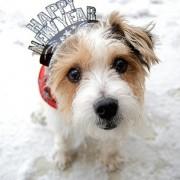 dog-happy-new-year
