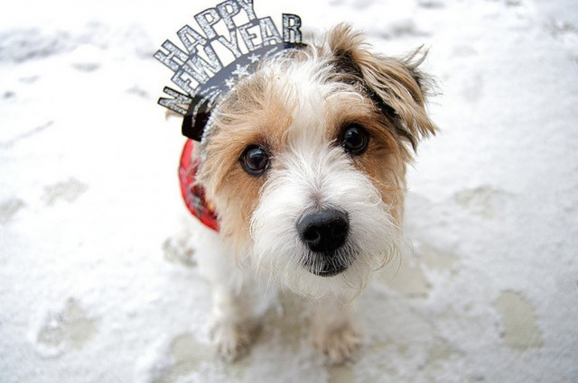dog-happy-new-year