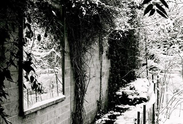 garden todmorden feb 2013