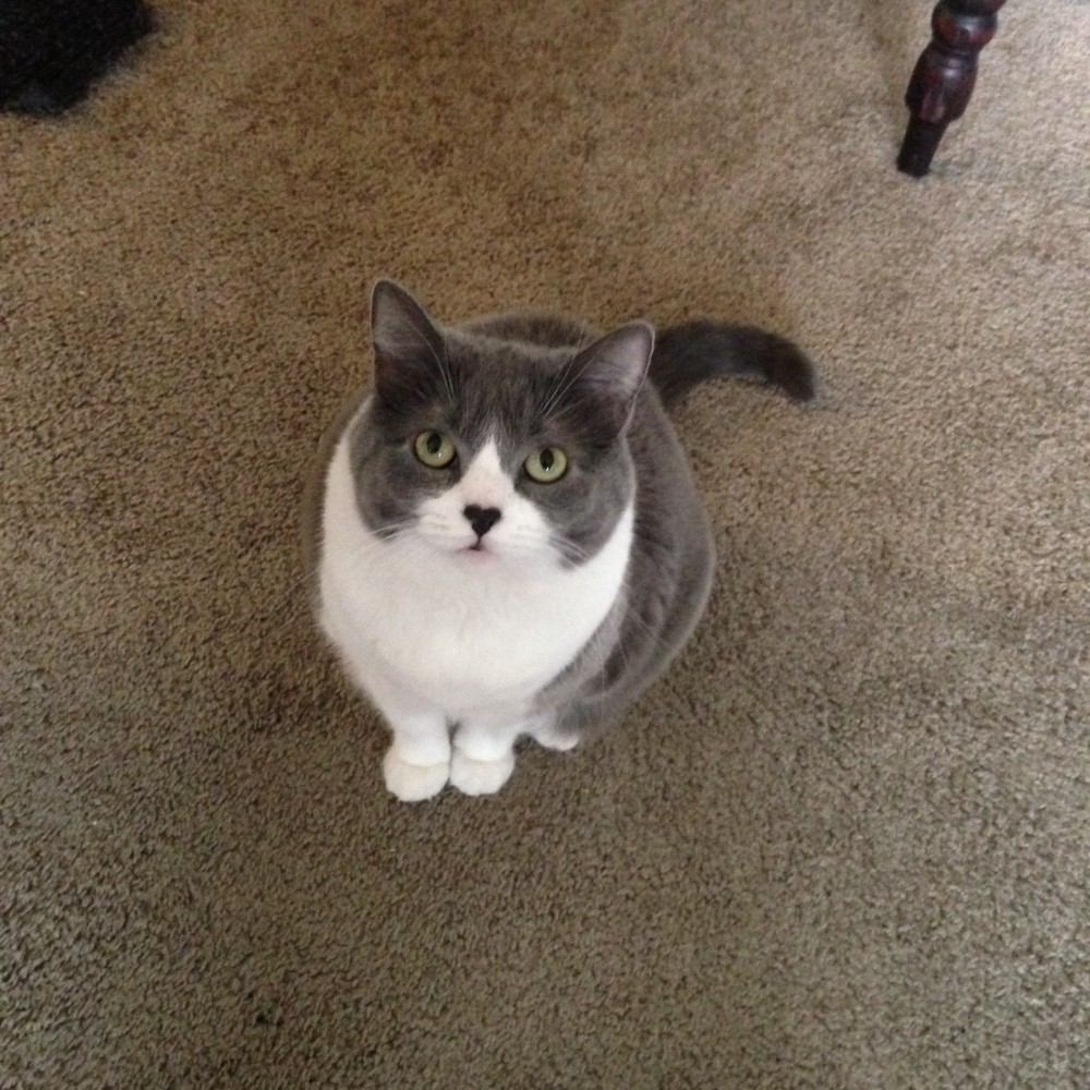 I love my cat Sawyer. She's wonderful and selfish and fat and she's never done anything wrong in her entire cat life.
