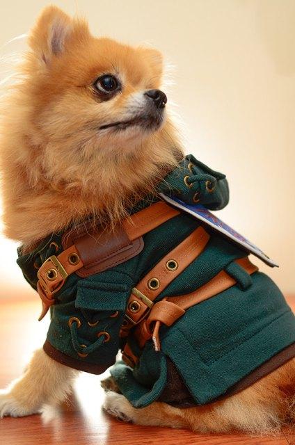 dog-link