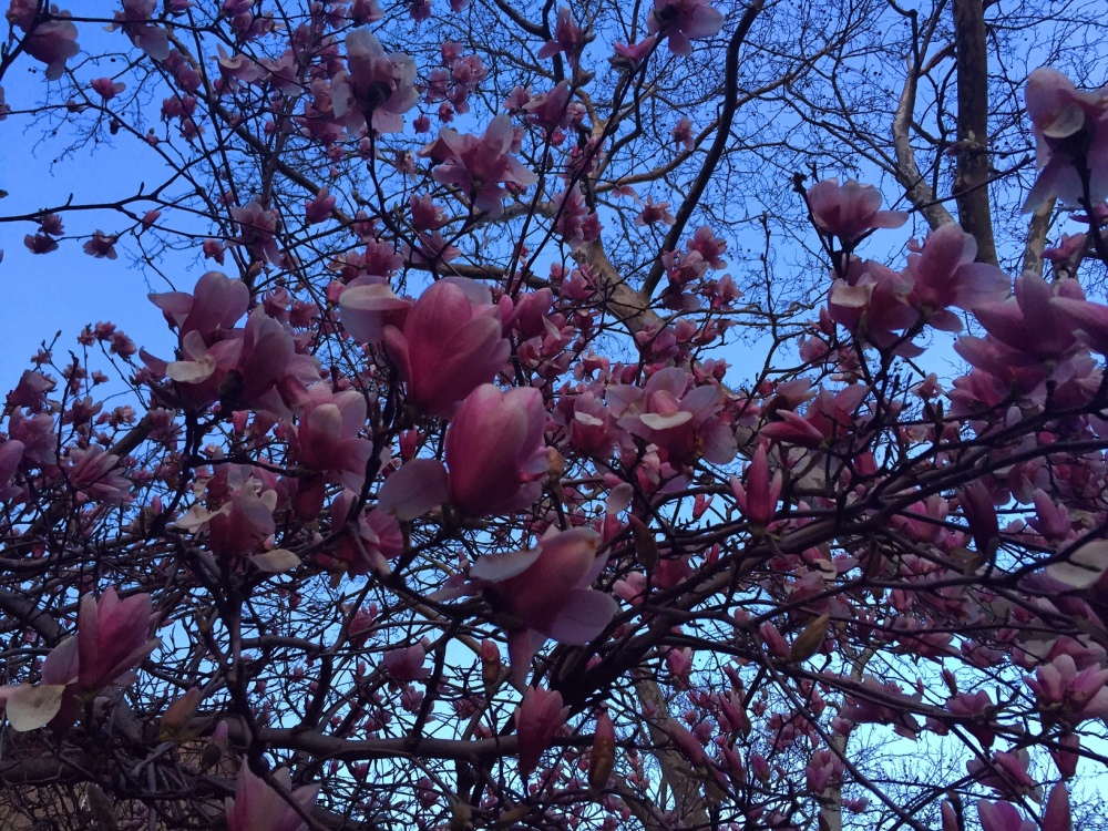 It's spring in my neighborhood. The magnolia trees remind me of summers in Smyrna, Tennessee.
