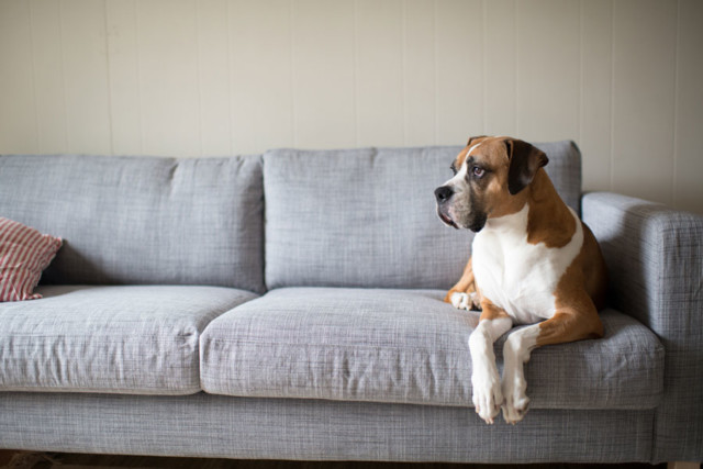 Dog_couch
