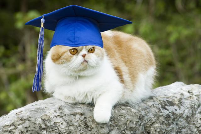 grad_cat