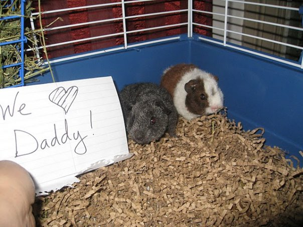 Father's Day 2010 message from our then-baby pigs.