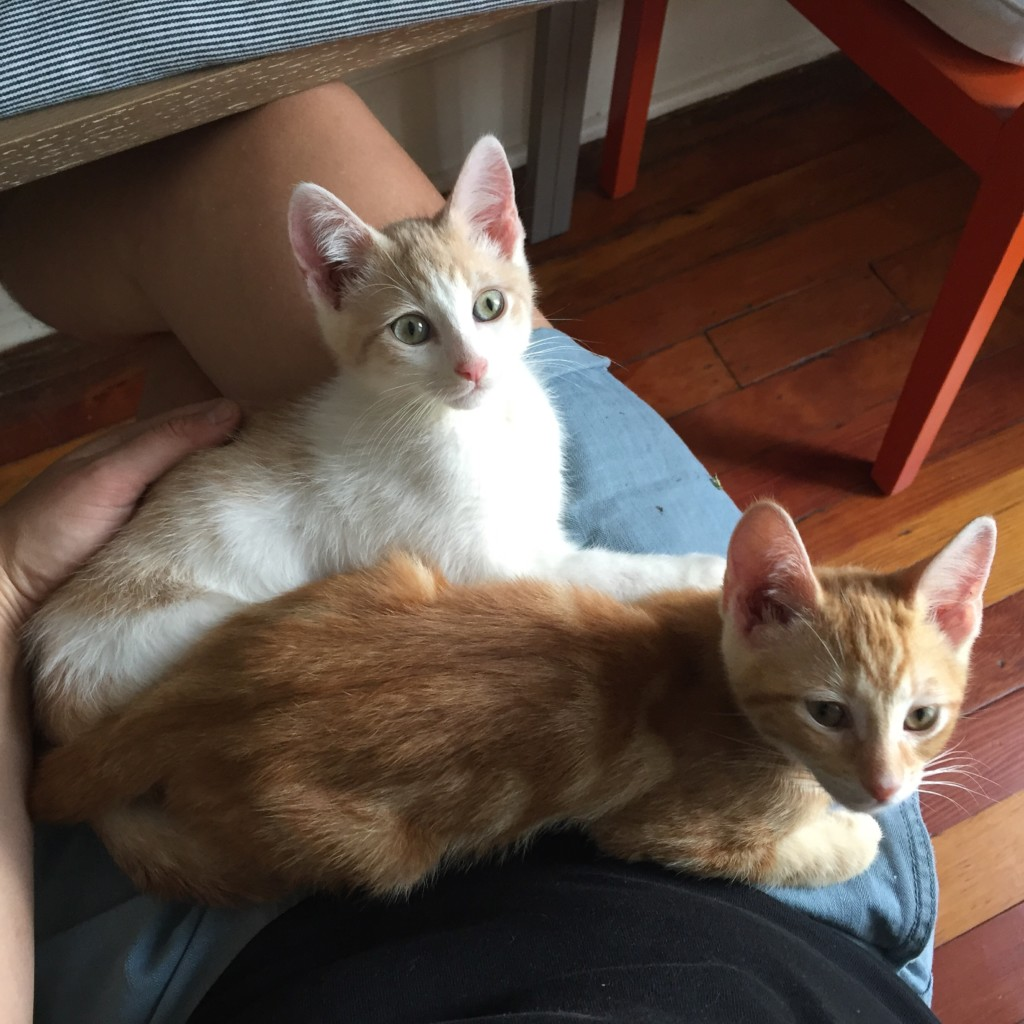 Image of the author's kittens on their lap
