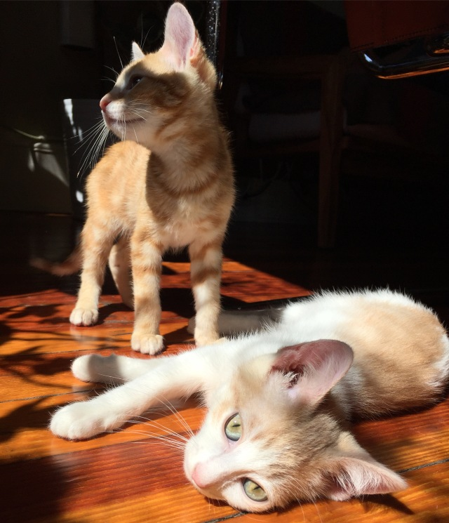 The author's new kittens