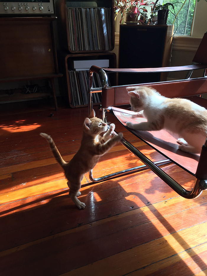 image of the author's cats playing