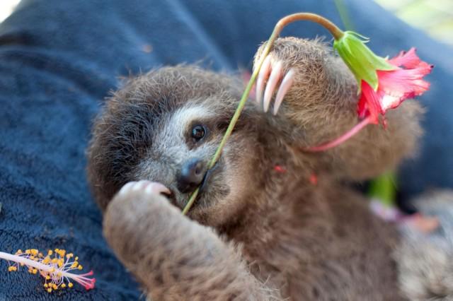 sam trull sloth