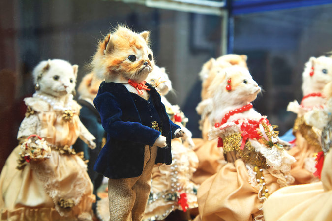 walter potter's the kitten's wedding