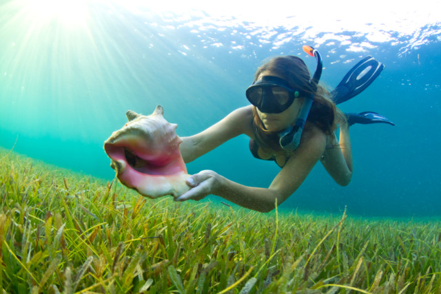 A woman snorkeling in The Caribbean and finding a conch shell