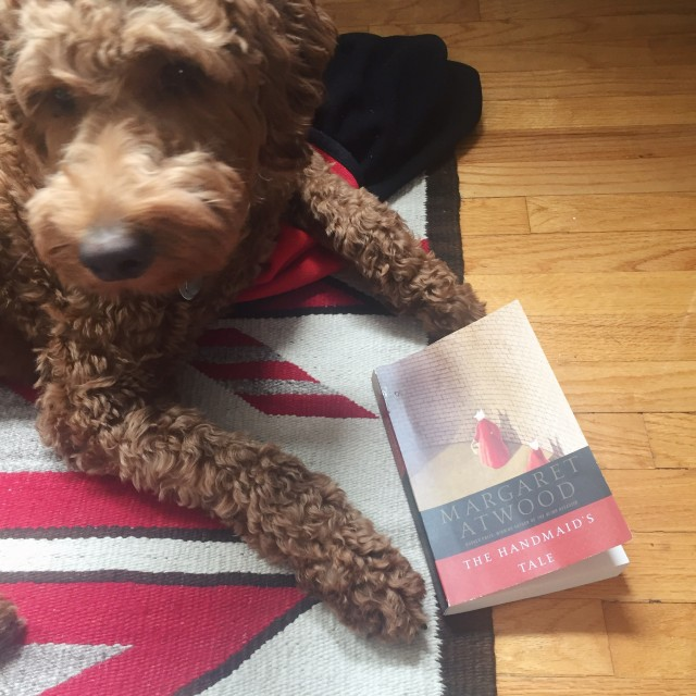 puppy posing with the handmaid's tale