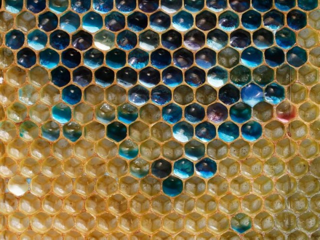 honey comb with blue honey inside