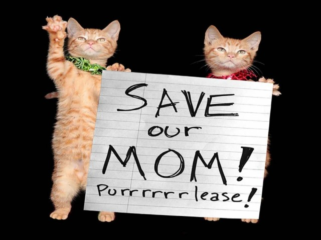 "Picture of two cats holding a piece of paper that has ""Save our Mom! Purrrrlease!"" written on it"