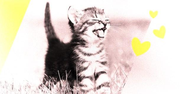cute kitten in a field laughing
