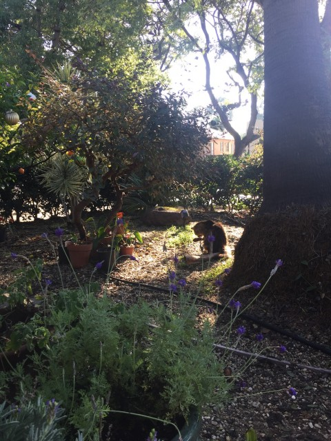 a garden, featuring a cat in a sunbeam licking its paw