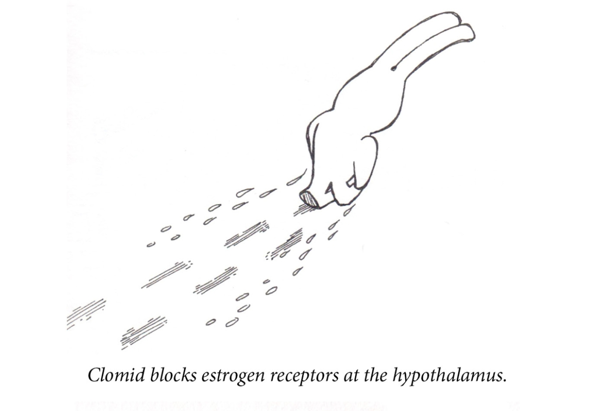 """Image description: A rabbit walks away from the viewer. Her shoulders are slumped and she's hanging her head low. In her wake are footprints and two rows of tears. Caption: """"Clomid blocks estrogen receptors at the hypothalamus."""""""