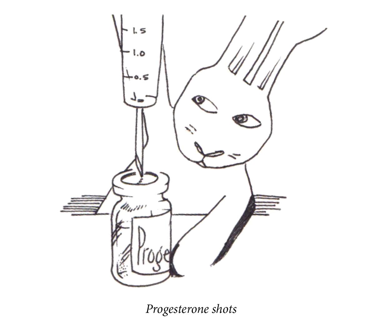 "Image description: A rabbit prepared a shot of progesterone. Caption: ""Progesterone shots."""