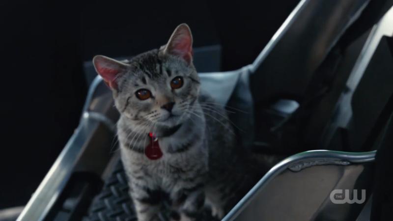 Kitty Zari!