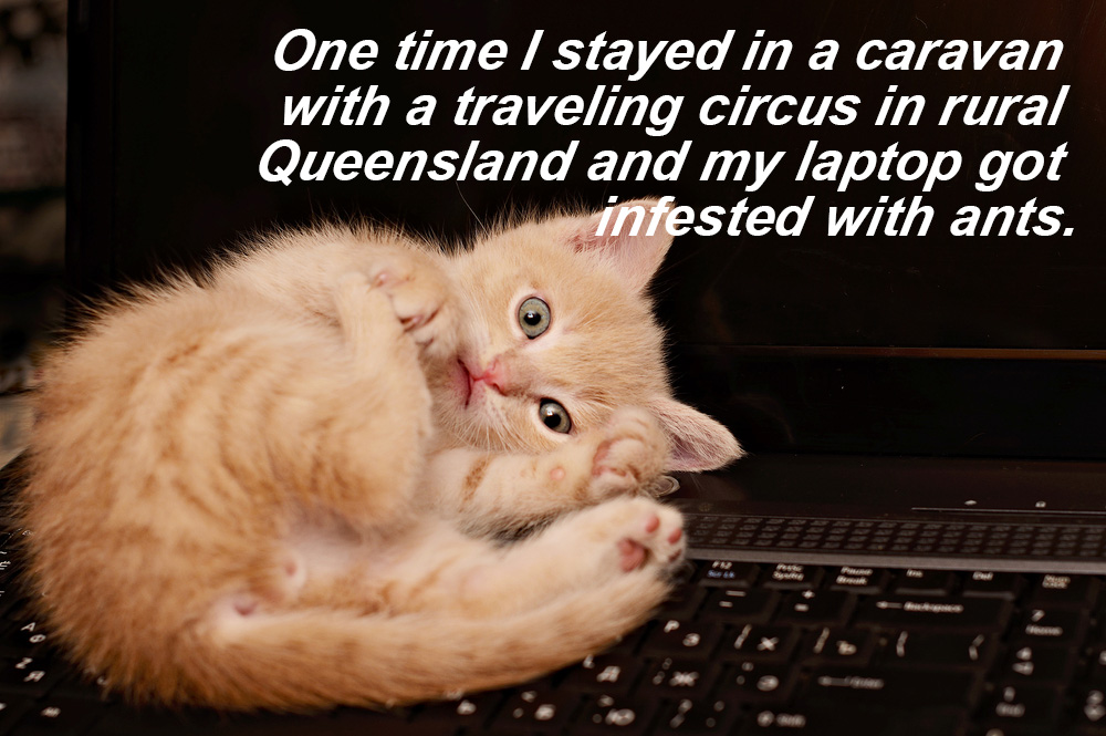 One time I stayed in a caravan with a traveling circus in rural queensland and my laptop got infested with ants.