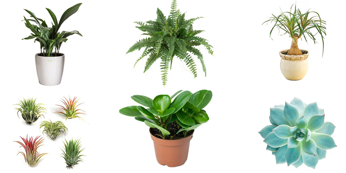 13 Easy Houseplants for Seasonally Depressed Gays and Their Cats